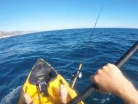 カヤックで釣りを楽しんでいた男性がシュモクザメに襲われそうになる動画。逃げても追いかけてくる(°_°)