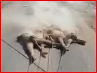 戦闘に敗れたイスラム国の戦闘員、車にロープで繋がれ市中引き回しの刑を受ける。
