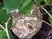 こんな手があったのか!スズメバチの巣を安全に駆除するアイデア。これはまじ頭ヨスギ!