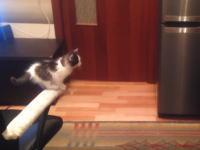 ネコ動画が好きな人はこのビデオでニヤニヤできるハズ。頑張る子猫のよくできました動画。