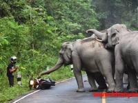 こんなん怖すぎるやろ(´°_°`)道路で野生の象さんに遭遇したライダーが絶体絶命の大ピンチに!