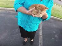 バイクの姉ちゃんGJ動画。交差点のど真ん中に子猫が落ちてたから保護して持って帰った(・∀・)