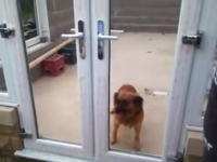 犬も思い込みをする。通れるのに通らないワンちゃんのビデオが最高wwww