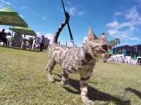 ドッグランにネコを連れて参加してみた。50匹の犬にまったく動じない珍しいニャンコ。
