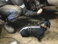 愛犬を仕事の助手にできる素敵なドッグウエアができたらしい。自動車整備犬。