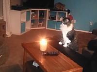 ニャンコはキャンドルの揺らめく炎を見るとついついネコパンチをしたくなるらしい。