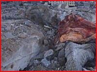 イラクでイスラム国の戦闘員の死体を食べている猫ちゃんの姿が撮影される。