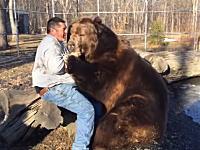 ヤバいくらいデカい熊と戯れる男。ヤツが本気を出したら片手で殺されるレベル(°_°)
