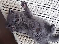 この子猫のクスクスパッ!可愛すぎるだろwww今日のみんなが萌えるネコネコ動画。