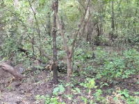 迷彩服の有効性。森の中から迷彩スーツでカモフラージュされた兵隊さんを見つけるビデオ。