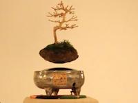 日本の盆栽がクールに進化してたwww「エアーボンサイ」もう少しで爆誕!