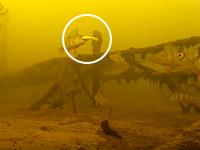 同じ所で何匹も釣れるww氷穴ルアー釣りを水中撮影してみた動画が面白い。