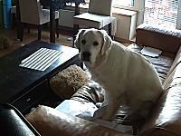 ペット監視カム。飼い主が外出中にイタズラしまくるワンちゃんのビデオ。これは酷いw