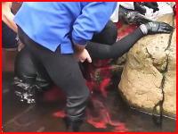 水族館で作業をしていたダイバーがサメに襲われてしまう衝撃映像。流血注意。