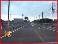 山口県で国道に飛び出してきたワンコをはねちゃったドラレコ。飼い主の目の前で(°_°)