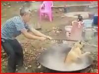 これは何(°_°)生きたワンちゃんを熱湯の入った大鍋に押さえつけているショッキングなビデオ。