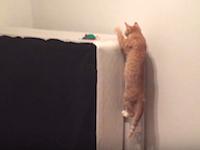 目が見えなくてもネコはネコ。やっぱり高い場所を好むらしい。盲目のレイ。