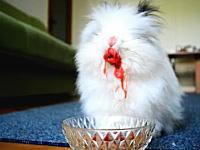 もふもふウサギに色汁の出る食べ物を与えるとwwwwちょっと怖いことになる動画。