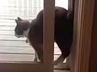 ニャンコの不思議な行動。あえて難しい方法で部屋に入る我が家のニャンコ。