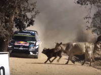 WRC動画。コースを横断しようとした牛の群れをギリギリで避けるラリーカー。