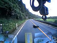 うp主もついつい「お゛お゛お゛~」国道で道路に飛び出してきた熊をはねちゃった車載
