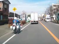 神奈川ですり抜けしようとした白バイがトラックと事故るという珍しい動画が投稿される。