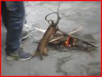 罠で捕まえたアナグマを焚火で楽しそうに拷問する中国人たち。誰もとめないのか。