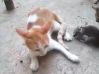 ネコの尻尾にネズミを結びつけると酷い事になる。これはイジメだろ(´°_°`)