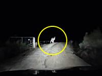 カンガルー怖すぎわろた(°_°)出会って3秒でフロントガラス割られた車載。