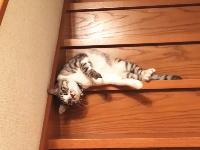 とてもだらしなく階段を落ちてくる猫ちゃんの映像が人気に。痒かったんだなwww
