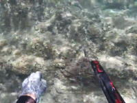 これは炎上の予感。魚突きのスピアでまさかの陸上動物を射抜いた男の映像が話題。