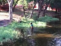酒に酔った男が動物園のライオンの獣舎に侵入する動画。どんな酔い方をしたらこんなことに?