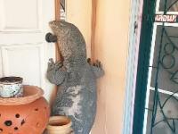 バンコクにこんなのいるのwww自宅に現れたオオ大トカゲがあまりにもデカすぎる(°_°)