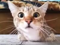 うちの子猫にホラー映画(サイコ)を見せたらこうなったwww