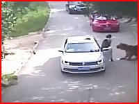サファリパークで死亡事故。車内で口論になりキレて車から降りた所をトラに襲われる。