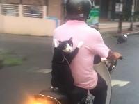 なんだこれカワイイwwwバイクで飼い主の背中に捕まって移動するニャンコが目撃される。