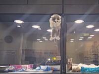 脱走するのかと思ったら。ペットショップで隣り合わせのケージに入れられた子猫と小犬が。