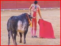 放送事故。闘牛のテレビ中継中にマタドールが牛に胸を突かれて死亡。その映像。