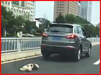 小犬を車で引きずって死なせた動画が大炎上。「言うことを聞かなかったから」