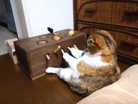 主が遊んでくれないから自分で機械を動かす事にした寂しそうなネコちゃんの映像が人気にww