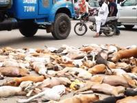 毒殺されたワンちゃんたちの扱いが・・・。パキスタンで増えすぎた野良犬を毒殺。