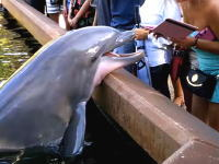 イルカにiPadを奪われてしまったお姉さんwww怒っちゃダメだけどこれはあああんwww