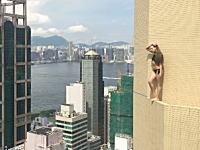 あんたどこに立ってるの?www高所でガクブルい動画シリーズにセクシーギャルが登場。