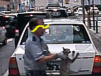 どうなのこれは。神戸で怪我したネコを反対側の歩道に投げ捨てる警備員が撮影され話題に。