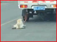 運転手は気づいていないのか。トラックに引きずられ続けるワンちゃんが撮影される。