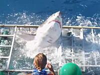 シャークウォッチング。ケージダイビングでホホジロザメが檻を破って中に入ってきたら。