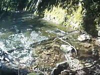 山梨県で渓流釣り中の男性が熊に襲われギリギリの所で助かる動画がコワスギル!