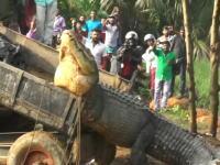 スリランカで捕獲され川にリリースされたクロコダイルがいくらなんでもデカすぎるwww