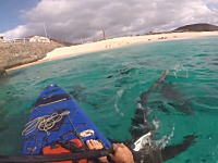 危険がいっぱい。大きなサメがうじゃうじゃ泳ぐビーチでカヤックに乗る男。