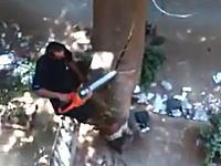素人作業の大失敗。大きな木をチェーンソーで切り倒そうとして(@_@;)